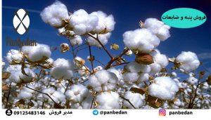 تولید پنبه در ایران